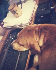 Dog sleeping on computer keyboard